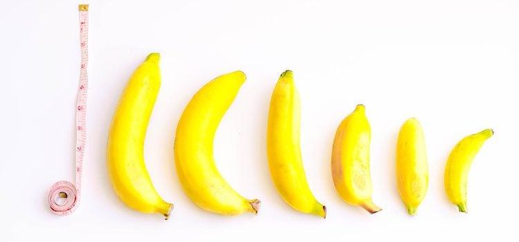 El tamaño medio del pene en erección se fija entre 15 y 18 centímetros