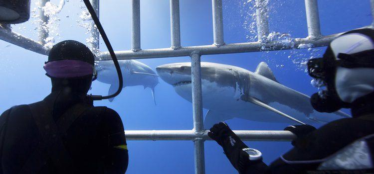 Si os gusta el riesgo, podéis bucear con tiburones en pareja, ¿cómo reaccionará tu pareja?