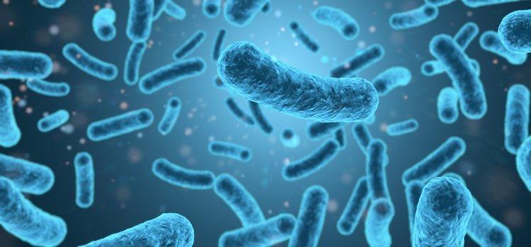 Esta ETS se podría convertir en una 'superbacteria'